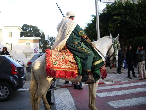 TALIM 7 mouloud horse