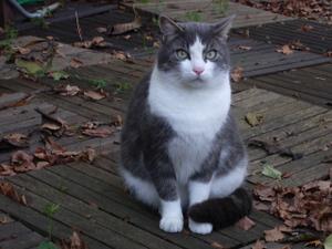 Cat_oneimgp0203_2